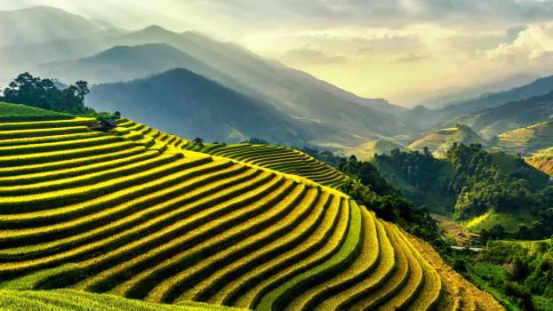Rice Terraces #327260