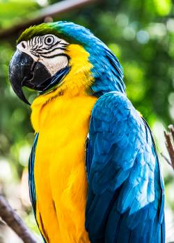 Close-Up Photography of a Parrot #327364