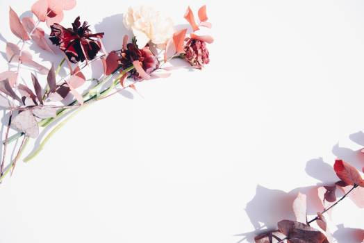 Pink and White Flowers on White Wall Free Photo