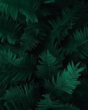 Photo of Green Fern Leaves #327481