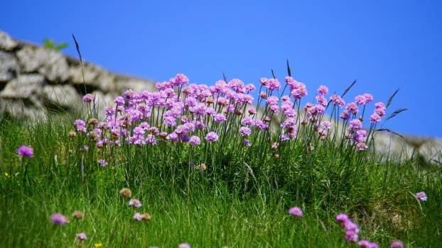Purple Flower during Daytime #32770