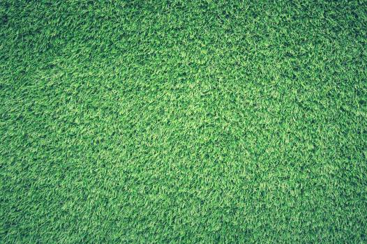 Green Grass Lawn #32793