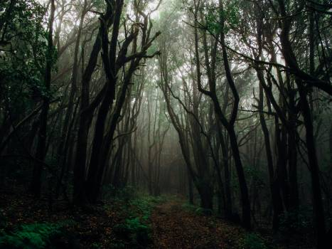Photo of Forest With Fog #327951