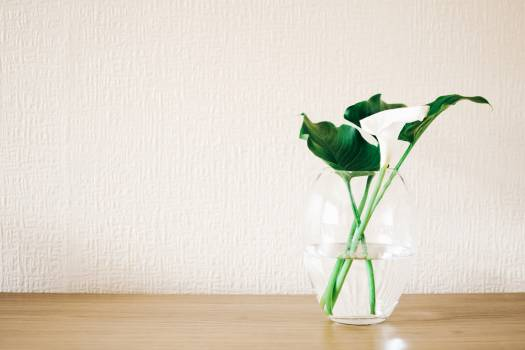 Green Plant on Clear Glass Vase #328253