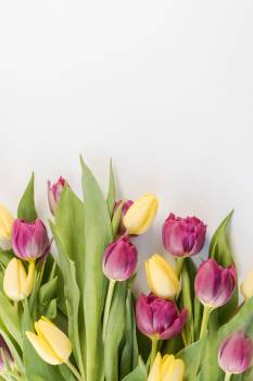 Selective Focus Photography of Pink and Yellow Tulips Flowers #328665
