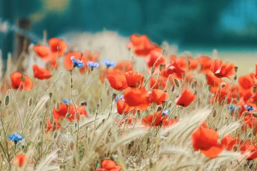 Orange Flower Free Photo