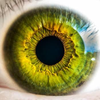 Eye iris anatomy biology Free Photo
