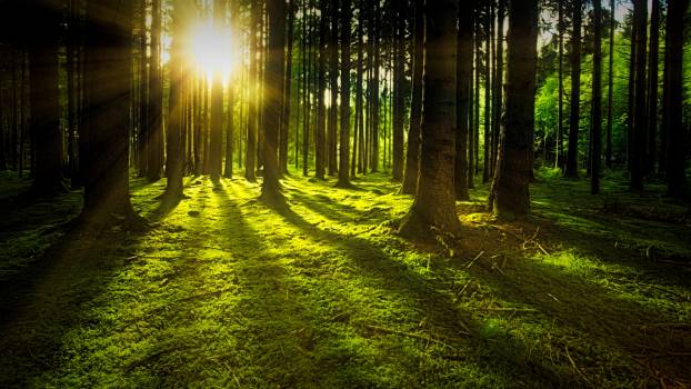 Sunset on Rain-forest #329144