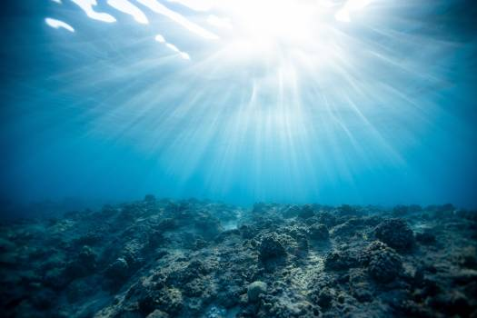 Underwater Photography of Ocean Free Photo