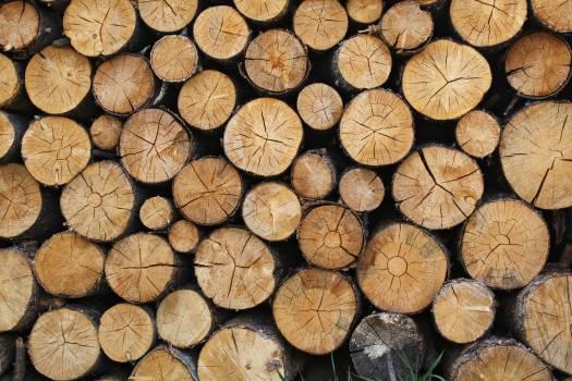 Pile of Brown Tree Logs Free Photo
