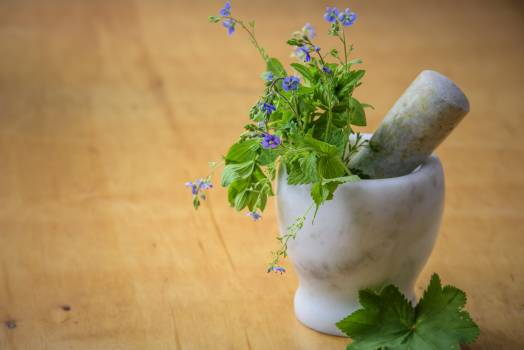 Purple Petaled Flowers in Mortar and Pestle Free Photo