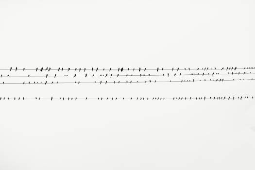 Birds Perching on Cable Lines Free Photo