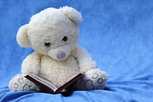 White Teddy Bear Reading Book #332340
