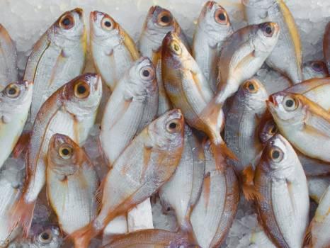 Pile of Fish Free Photo