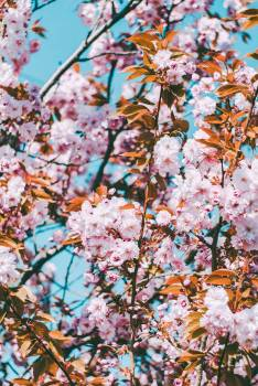 Photo of Pink Flowers During Daytime #332483