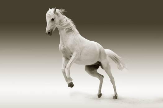 Nature animal white mane #33248