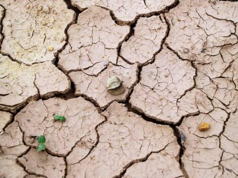 Cracked Brown Soil Free Photo