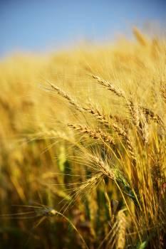 Closeup Photography of Rice Grains #332845