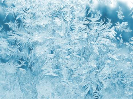 White Feathers Illustration Free Photo