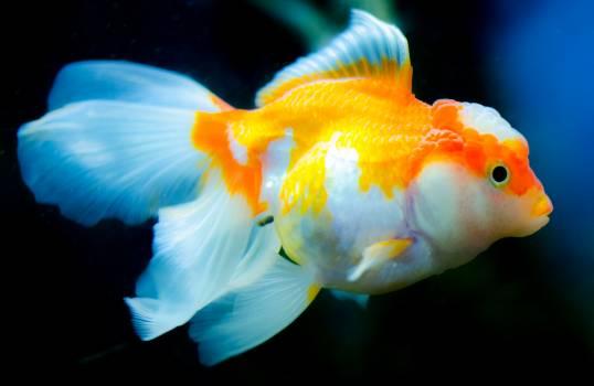 Orange and White Fish Free Photo