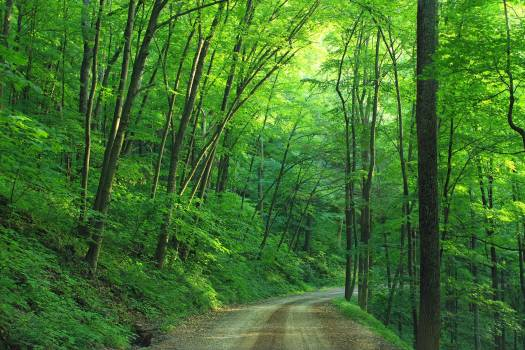 Green Tree Beside Roadway during Daytime #333848