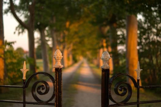 Pathway Between Green Trees Brown Steel Gate during Daytime Free Photo