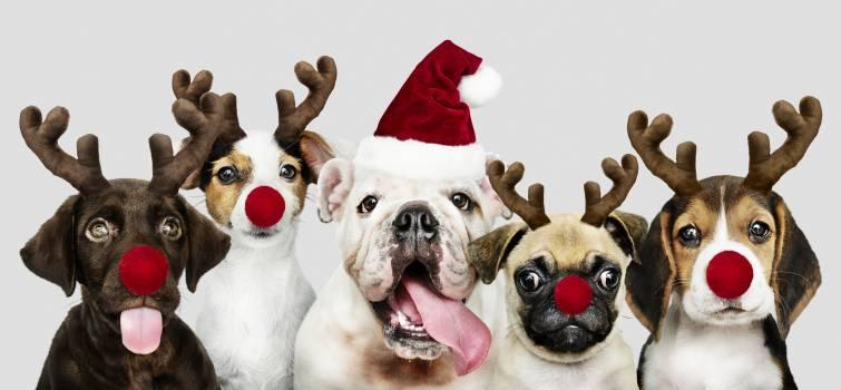 Adorable animals beagle bulldog #334256