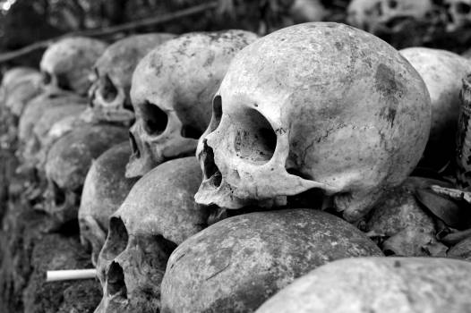 Grey Skulls Piled on Ground #334333