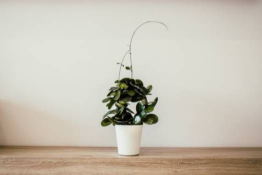 Green Plant With White Ceramic Pot #335220