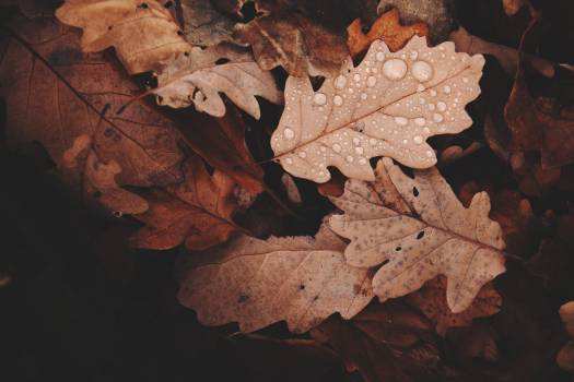Withered Leaves Photo Free Photo