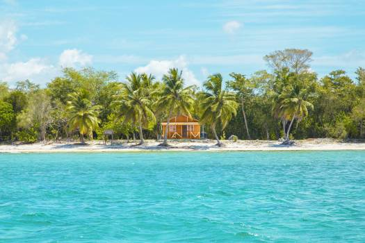 Photo of Wooden Cabin on Beach Near Coconut Trees Free Photo