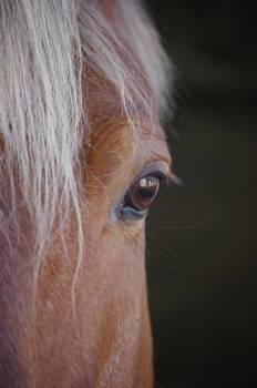 Close-up Photo of Horse Free Photo