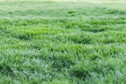 Photo Of Green Grass Free Photo