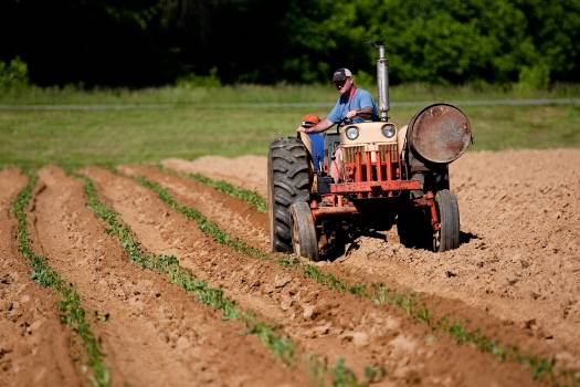 Man Riding Red Tractor On Field Free Photo