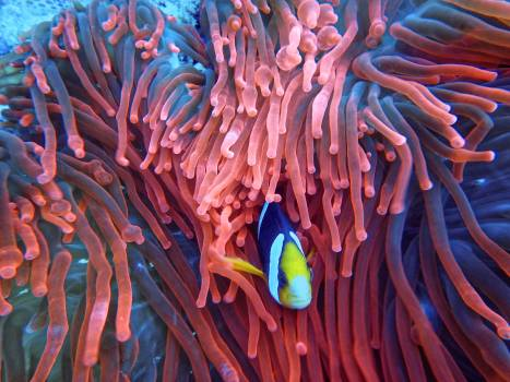 Photo of a Fish on Corals #336598