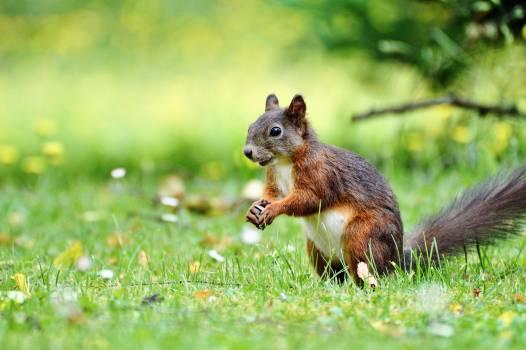 Squirrel on Grass Free Photo