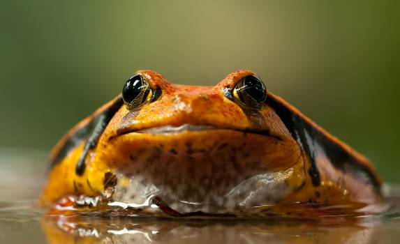 Orange and Black Frog Free Photo