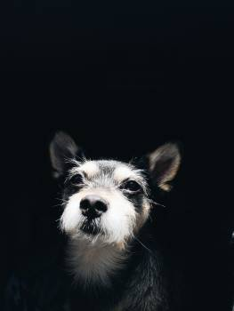 Photo Of A Puppy #337024