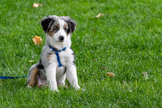 Puppy On Grass Field #337135