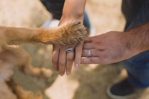 Two Person With Rings on Ring Fingers Free Photo