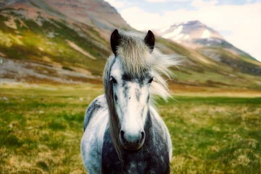White Horse on Body of Mountain Free Photo
