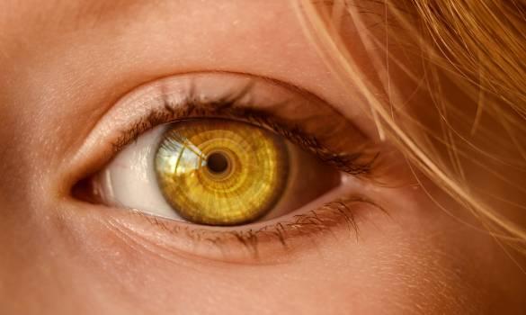 Close Up of Human Eye Free Photo