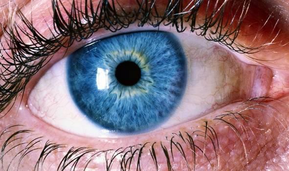 Blue Human Eye Free Photo