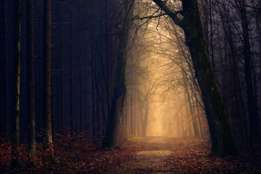 Trees Near Pathway #337414