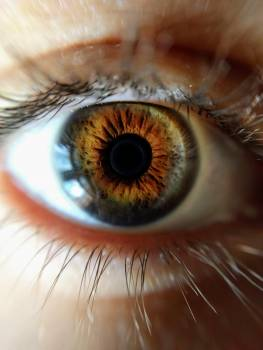 Human Eye Closeup Photo Free Photo