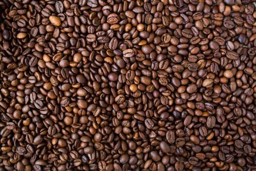 Brown Cocoa #33782