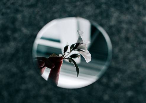 White Petaled Flower Reflection From Small Round Mirror Free Photo