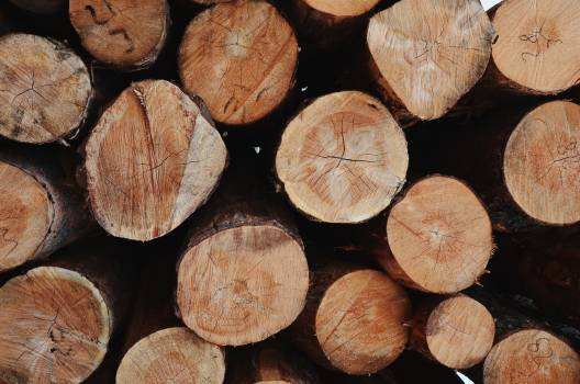 Photo of Pile Of Chopped Woods #338104