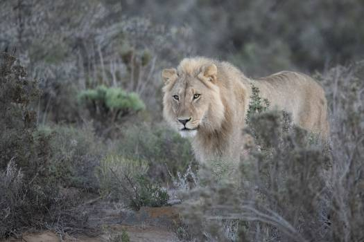 Photo of Lion Beside Green Leaf Trees #339532