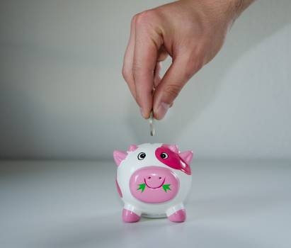 Pink and White Ceramic Pig Coin Bank #339572